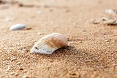 Sea Shell On The Sand