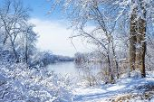 Snow Flocked Trees, Mississippi River