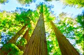 Redwood Grove en California del norte.