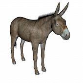 Donkey standing