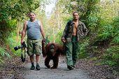 Photographers Walk With Orangutan.