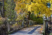 Fall Foot Bridge