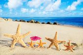 Starfishes On The Sandy Beach