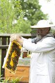 Working apiarist