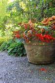Beautiful shade planter filled with trailing begonias and lobelia.