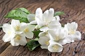 Jasmine flowers with leaves over old wooden table.