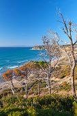 Gibraltar Strait, Morocco. Dry Pine Trees On Rocky Coast