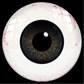 Vector Human Eye