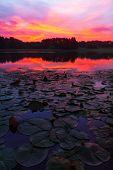 Lily Pads Sunrise