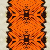 Beautiful Orange And White Background Pattern Made Of Orange Tip Butterfly's Wing Skin Texture
