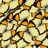 Compilation Of Yellow Orange Tip Butterflies In A Great Background Texture