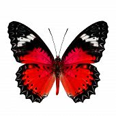 Nice Of Red Butterfly In Fancy Color Profile Isolated On White Background