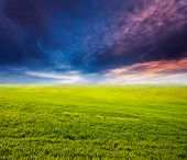 Fantastic green field at the sunset. Colorful overcast sky. Ukraine, Europe. Beauty world.