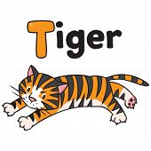 Funny Wild  Tiger, For Abc. Alphabet T