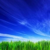 High resolution image of fresh green grass and blue sky landscape. Perfect as background, backdrop, design element. Square composition good to crop if needed.