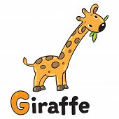 Постер, плакат: Little funny giraffe for ABC Alphabet G