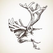 Reindeer head with big extra horns, Vector sketch, Hand drawn illustration