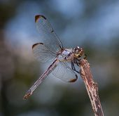 Hungry Bug