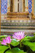 Water Lily In Wat Phra Kaew
