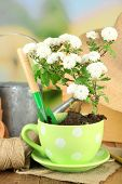 Rustic table with flowers, pots, potting soil, watering can and plants. Planting flowers concept