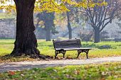 stock photo of serbia  - Bench under the tree in the Kalemegdan park Belgrade Serbia  - JPG