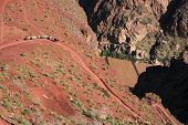 stock photo of grand canyon  - a Grand Canyon mule train on the lower South Kaibab Trail