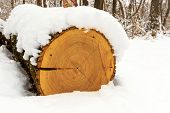 Log under snow in forest