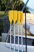 picture of paddling  - Yellow paddle boat paddles on the beach in Thailand on Koh Samui  - JPG