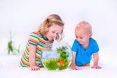 Kids Watching Fish Bowl