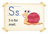 A letter S for snail on a white background