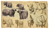 Animals, Theme: Bovidae (cows, Bisons, Yak, Buffalo). Vector Pack.