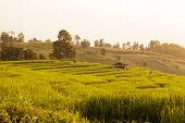 stock photo of bong  - Hut in green terraced rice field during sunset at Ban Pa Bong Peay in Chiangmai - JPG
