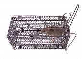 picture of mouse trap  - rat trap in front of white background - JPG