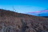 pic of grassland  - Moonrise over rural wild field or grassland - JPG