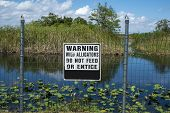 stock photo of alligator  - A sign warning people about feeding alligators in the Everglades Florida - JPG