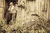 foto of excrement  - Farmer Shoveling the Horse Manure out of the Barn - JPG