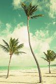 picture of atlantic ocean beach  - Palm trees growing on sandy beach - JPG