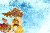 foto of freezing temperatures  - Fallen autumn leaves in the blue ice - JPG