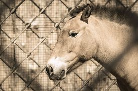 image of big horse  - profile of the big head or muzzle of a horse of beige color sideways closeup against the open - JPG