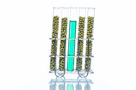 picture of modifier  - Mung Bean genetically modified Plant Cell biotechnology - JPG