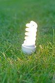 Energiesparlampe auf Gras.