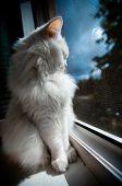 gato blanco sentarse junto a la ventana en late night
