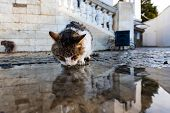 Homeless Cat Drinks Water From A Puddle After The Rain. poster