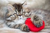 Beautiful Persian Kitten Cat With Red Heart poster