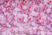 Pink Roses Background  / Pink Roses Wallpaper / Pink Roses poster
