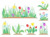Spring Garden Flowers. Early Flower, Colorful Gardens Plants And Flowering Plant Gardening Flat Vect poster
