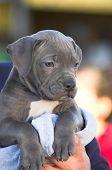 Puppy2
