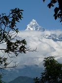 Snowcovered Fishtail mountain, Annapurna range, Nepal, framed by branches.