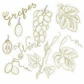 Vector Set Of Grapes, Letting The Words Grapes And Wine. Image Of Grapes In The Style Of Sketch, Dra poster