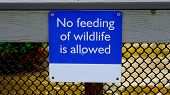 No Feeding Of Wildlife Is Allowed Metal Sign Attached To A Metal Fence Of A Park Walkway. No Feeding poster